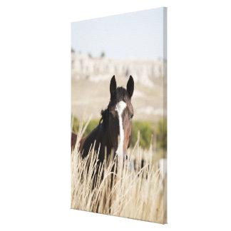 Wild horses in South Dakota Canvas Print