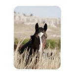 Wild horses in South Dakota Flexible Magnet