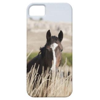 Wild horses in South Dakota iPhone SE/5/5s Case
