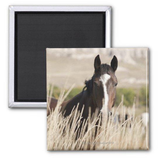 Wild horses in South Dakota Magnet