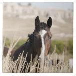 Wild horses in South Dakota Tile