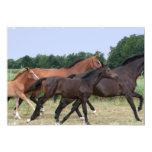 Wild Horses Invitation