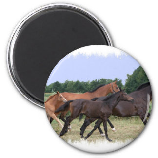 Wild Horses Magnet Magnets