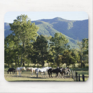 Wild Horses Mouse Pads