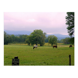 Wild Horses of Cades Cove Postcard