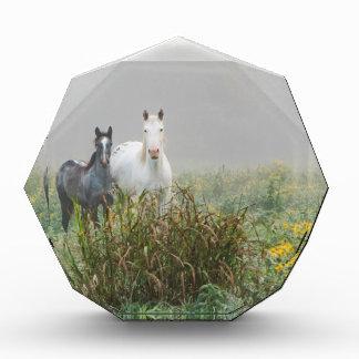 Wild Horses of Missouri Acrylic Award