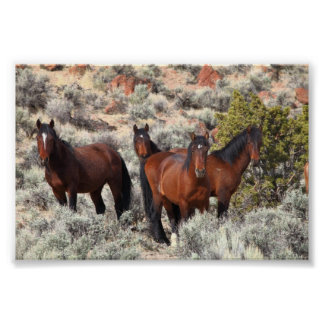 Wild horses of Palomino Valley #6 Poster