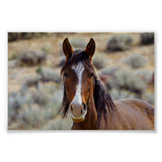 Wild Horses of Palomino Valley South Posters
