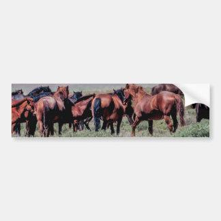Wild Horses Out West Closeup Photo Bumper Sticker