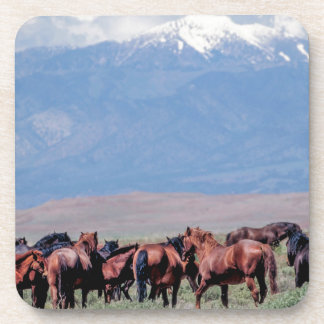 Wild Horses Out West Drink Coaster