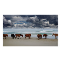 Wild Horses Outer Banks Corolla NC Poster