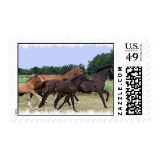 Wild Horses Postal Stamp