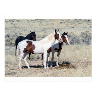 JaxHolidayCards WILD HORSES POSTCARD
