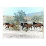 Wild horses postcards