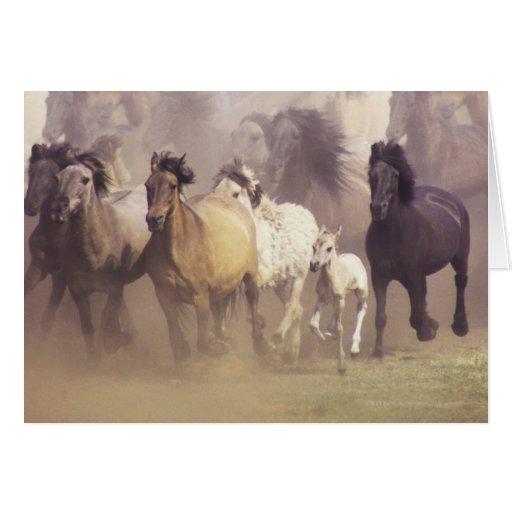 Wild horses running cards