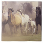 Wild horses running large square tile
