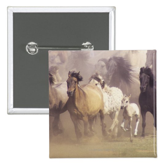 Wild horses running pinback button