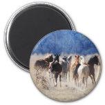 Wild horses running refrigerator magnets