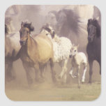 Wild horses running square stickers