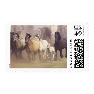 Wild horses running stamp