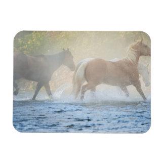 Wild horses running through water vinyl magnets