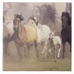 Wild horses running tile