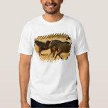 Wild horses shirts