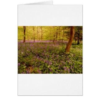 "Wild hyacinth ""scilla non-scripta"" card"