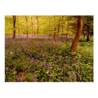 """Wild hyacinth """"scilla non-scripta"""" postcard"""