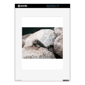 Wild Iguana Skins For iPad