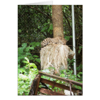 Wild in the Jungle.... Stationery Note Card