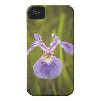 Wild Iris I iPhone 4 Cases