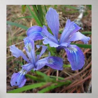 Wild Iris Pair Print