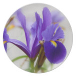 Wild Iris Party Plate