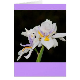 Wild Irises Card