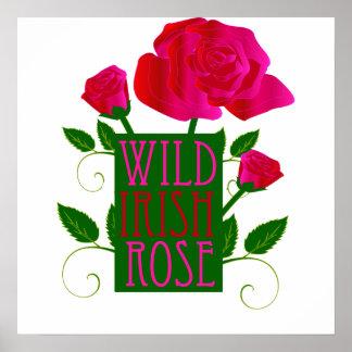 Wild Irish Rose Poster