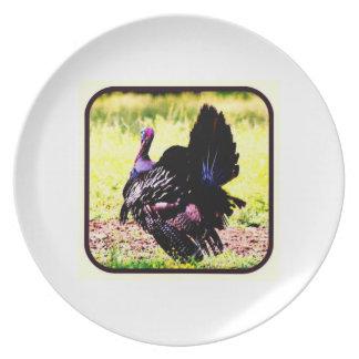 Wild Kentucky Tom Turkey Photograph Plates
