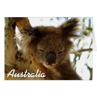 Wild koala sleeping on eucalyptus, Australia, Note Card