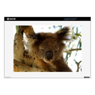 """Wild koala sleeping on eucalyptus tree, 15"""" Photo Laptop Skin"""