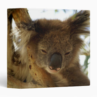 Wild koala sleeping on eucalyptus tree, Photo 3 Ring Binder
