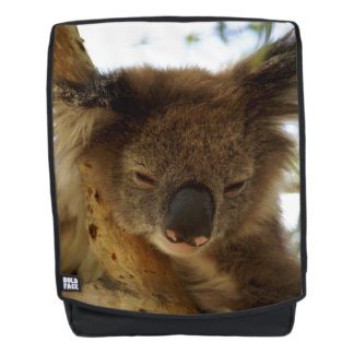 Wild koala sleeping on eucalyptus tree, Photo Backpack
