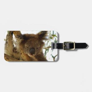 Wild koala sleeping on eucalyptus tree, Photo Bag Tag