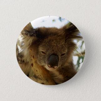 Wild koala sleeping on eucalyptus tree, Photo Button