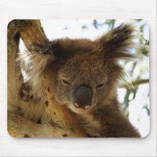 Wild koala sleeping on eucalyptus tree, Photo Mouse Pad