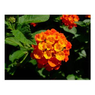 Wild Lantana flower postcard
