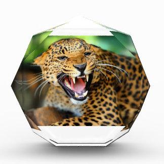 Wild Leopard Award