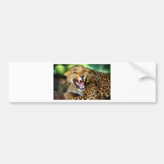 Wild Leopard Bumper Sticker