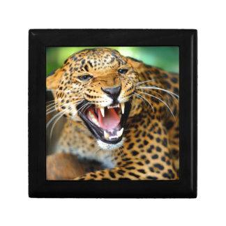 Wild Leopard Gift Box