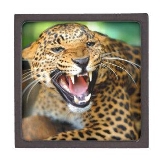 Wild Leopard Jewelry Box