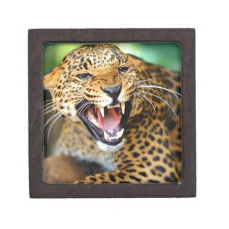 Wild Leopard Keepsake Box